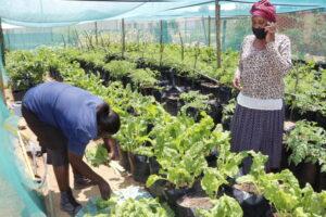 Brasil faz doação para projeto comunitário de sistemas alimentares na Namíbia