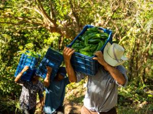 Ano das Frutas, Legumes e Verduras: vídeos dos Diálogos Regionais estão disponíveis